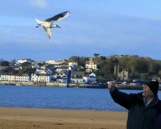 Seagull flies every day to visit 80-year-old man who saved its life 12-years ago (photos)